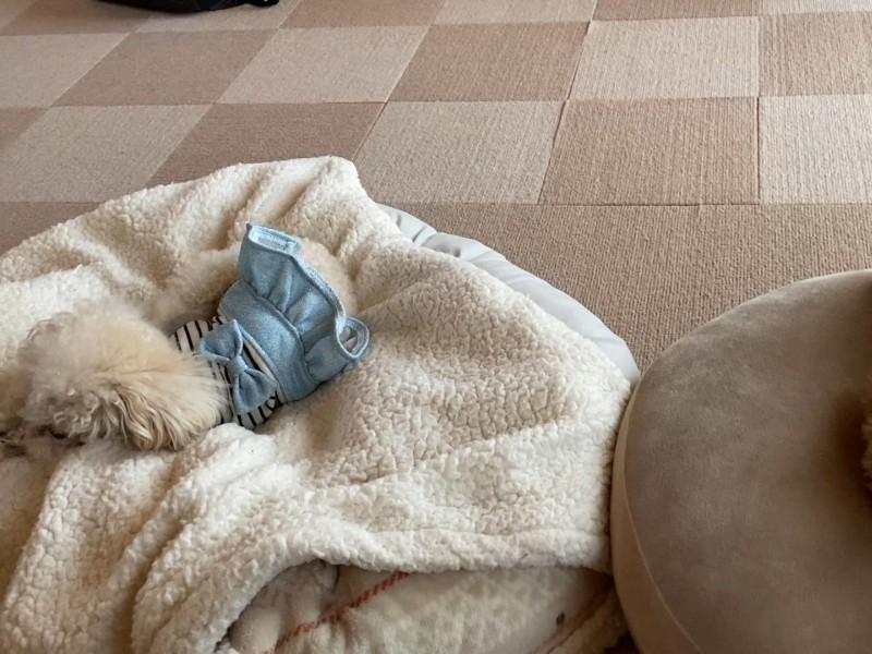 寝過ごした犬