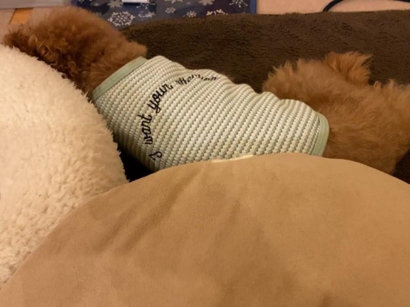 床で寝る犬