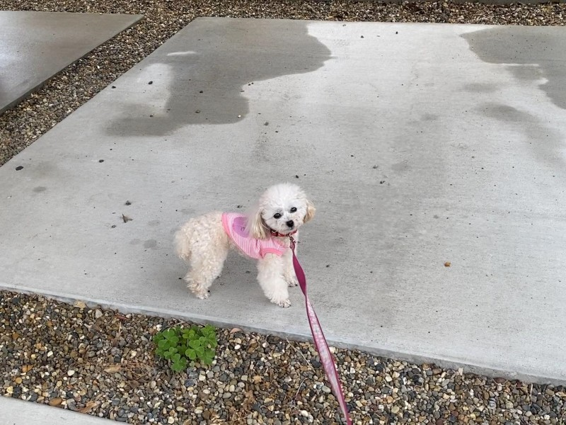 散歩に行きたくない犬