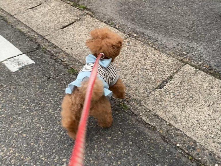 猫に立ち向かう犬