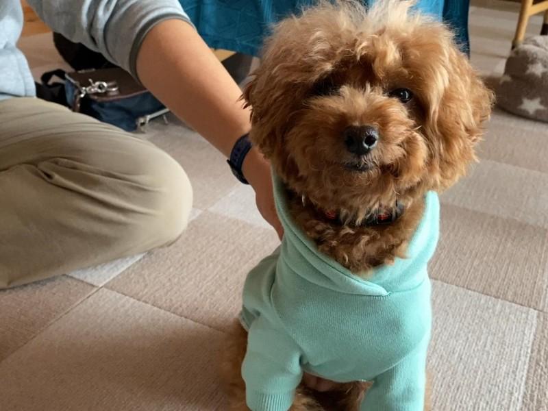 うれしそうな犬うれしそうな犬