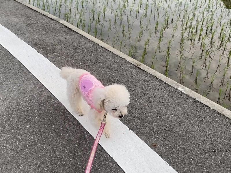 犬の朝散歩