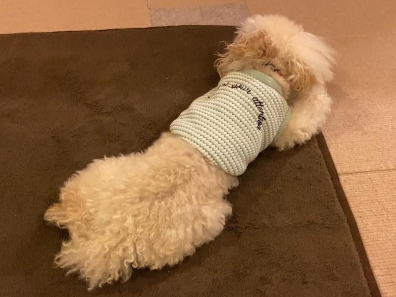 体を冷やす犬