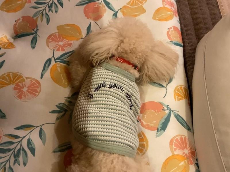 爆睡中の犬
