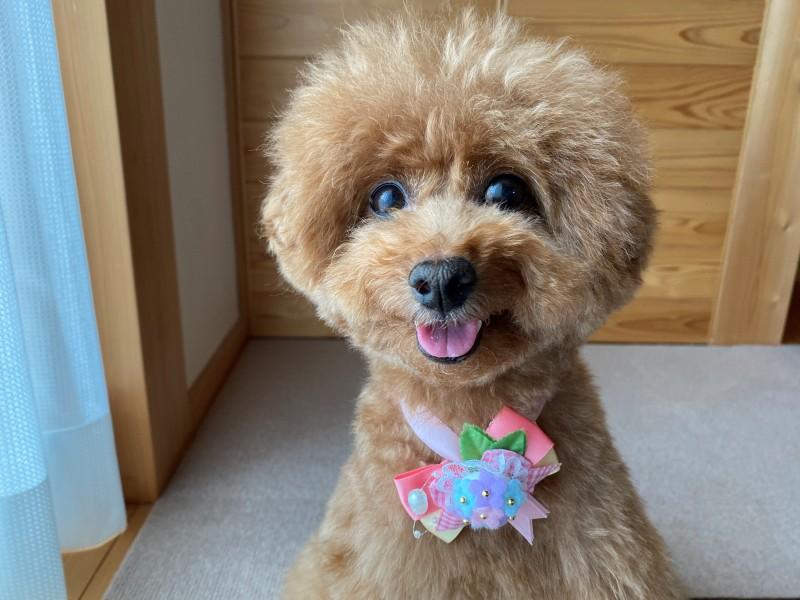 お目目ぱっちり犬