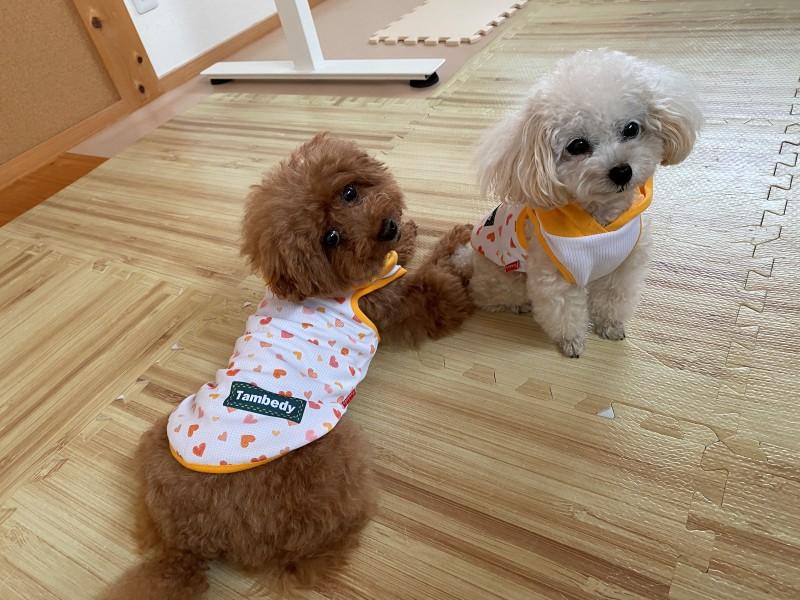 フード付き犬服