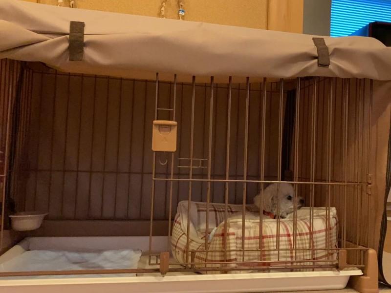避難した犬
