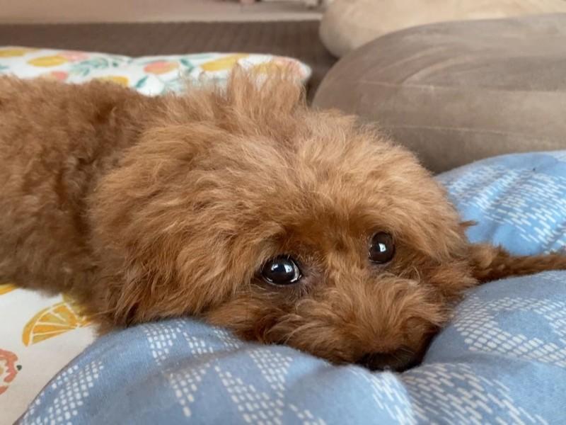 ネムネム犬
