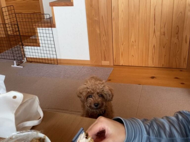圧をかける犬